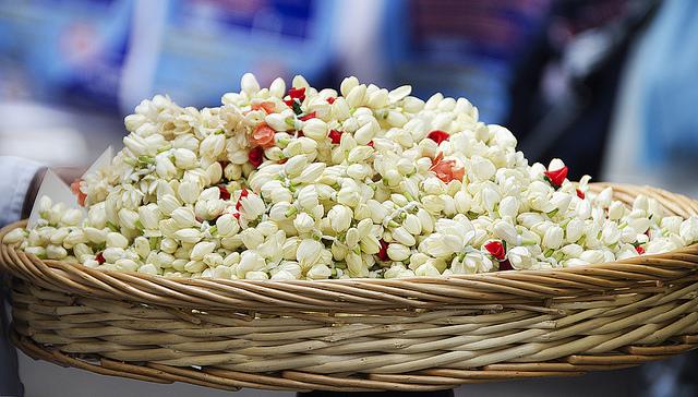 Basket of flowers, possibly jasmin