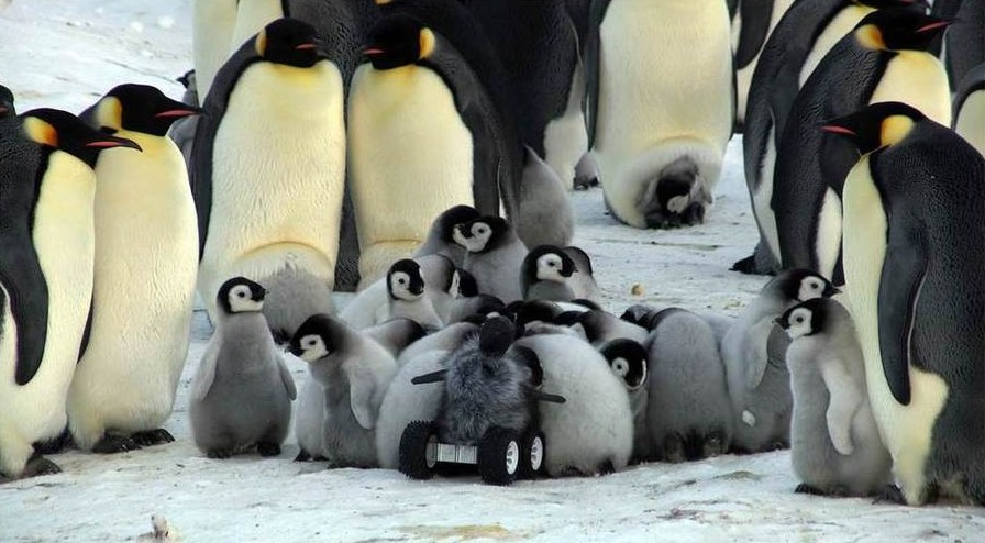 baby penguin rover huddle