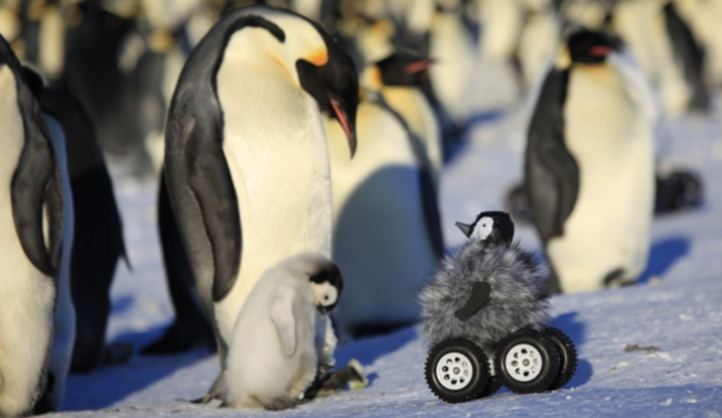 baby penguin rover