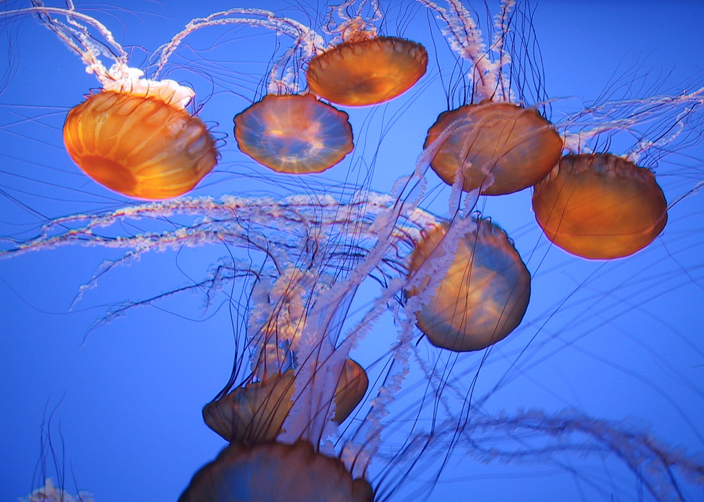 Three facts about jellyfish | Day 169