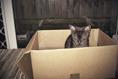 why cats love boxes