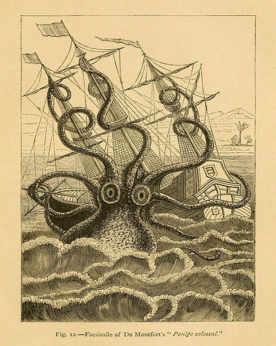 colossal squid photo