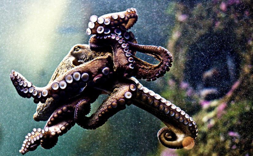 Happy Cephalopod week | Day 308