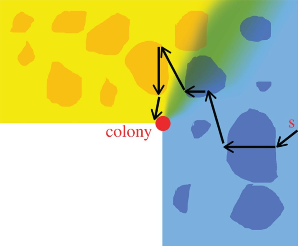 "Figure 2. ""A sketch of the proposed mechanism of olfactory navigation in pelagic birds. Birds associate odours to wind directions, so that a bird knows that when on the colony odours 'blue' and 'yellow' are emanating from East and North, respectively (the green colour indicates that there are areas where odours may mix)."" 