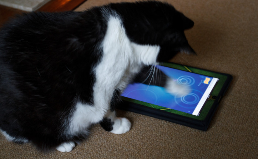 Cats are gamers, too | Day 329
