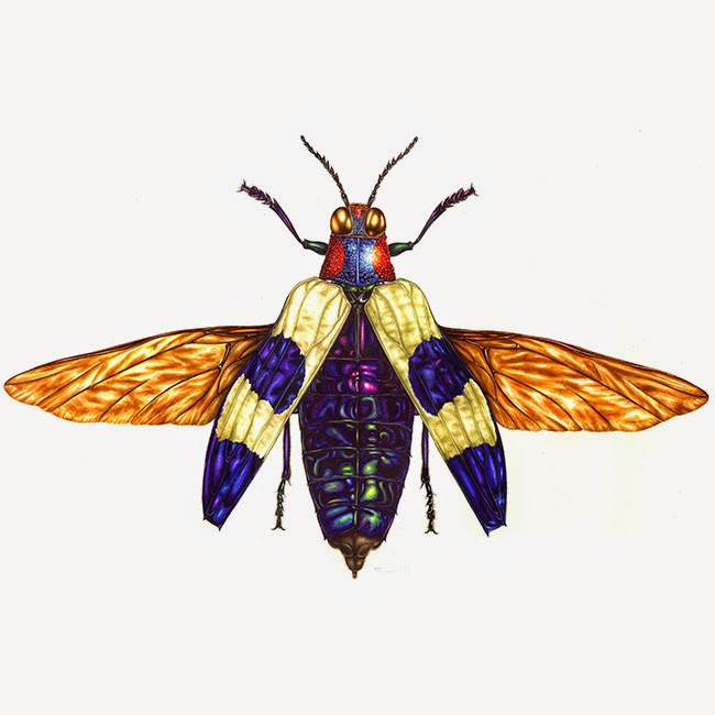 Red Speckled Jewel Beetle illustration