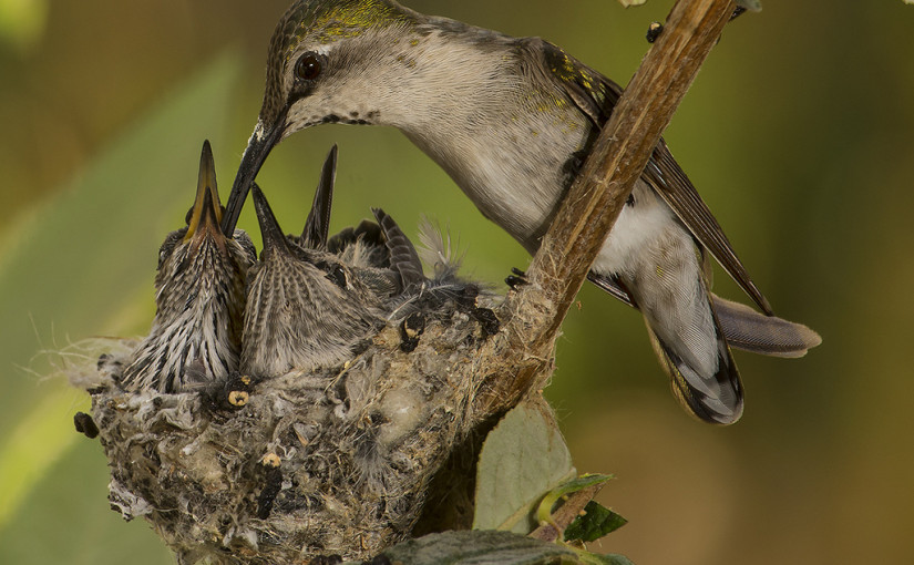 Why birds build nests the way they do | Day 264
