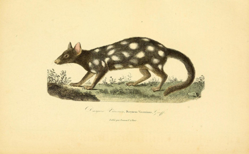 The polka dot marsupial is coming back | Day 357