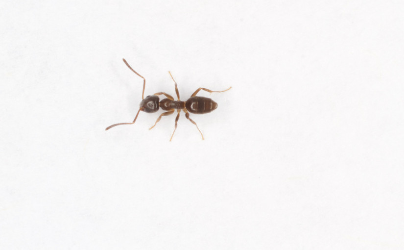 Does this ant smell like cheese to you? | Day 361